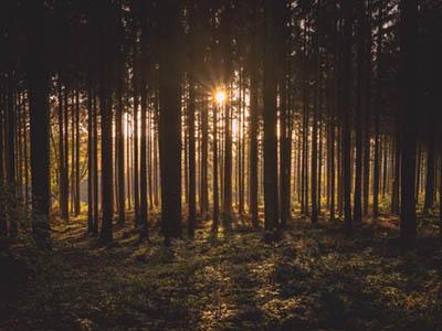 Sun rising behind trees